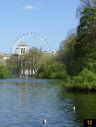 View of London Eye from the park